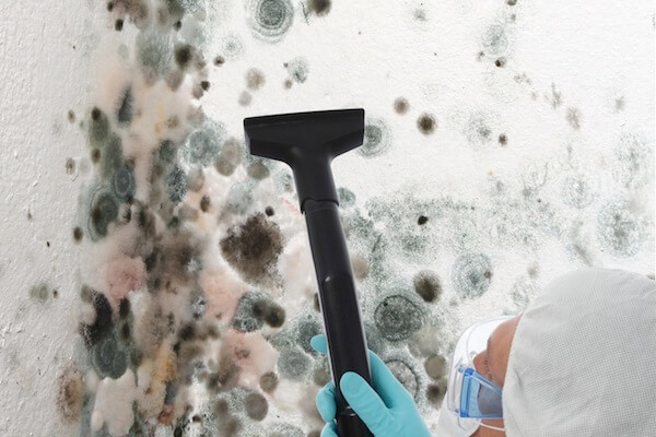 mold-removal6
